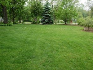 Casey Garden Services lawn mowing