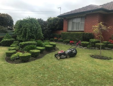 hedging and pruning