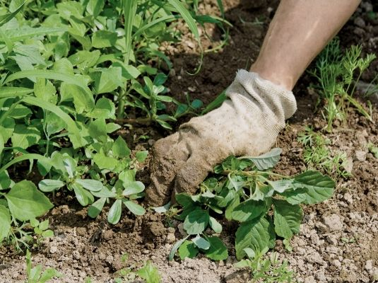weed control is important to maintain a healthy garden